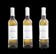 Hvidvin smagesæt - enkeltdrue - 3 vine